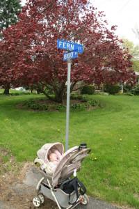 Fern St @ Hemlock Dr, 5/9/13